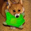 Frizbee Dog_20110827_083
