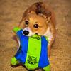 Frizbee Dog_20110827_098