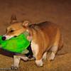 Frizbee Dog_20110827_112
