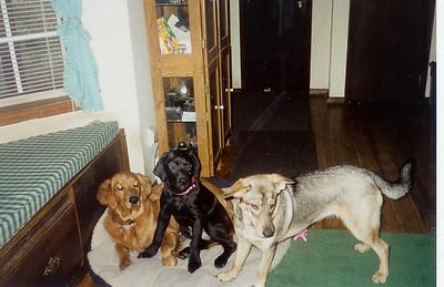 Sam, Charlie, and Matilda.