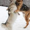 Snow Wrestling