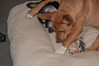 Sage pins Chica (Jan 14, 2013)