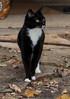 Binky - October 2010