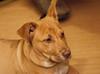 Sage, December 2012:  Here is my serious look!