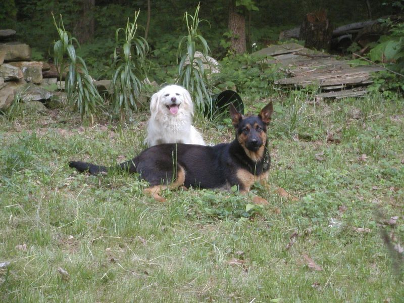 Sparky (on left) and his buddy, Shadow