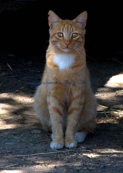 Ferel Cat
