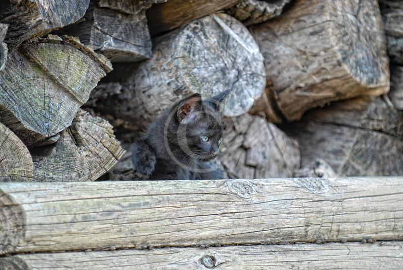 Black kitten in wood pile