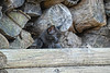 Black kitten in wood pile
