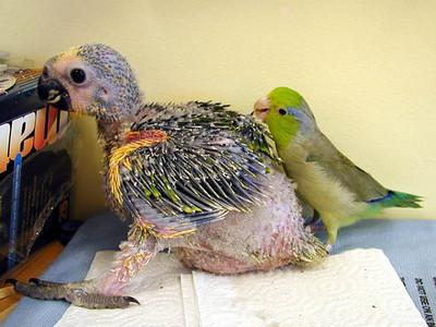 Rowdy preening baby Beemer