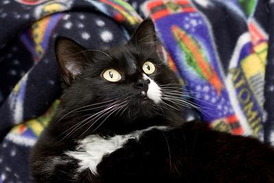 Katz.