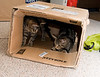 NOT THE CAT IN THE HAT.....IT'S THE KITTENS IN THE BOX!