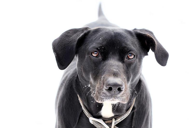 I, Dog