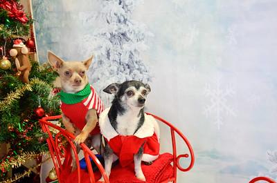 Petsense  Santa