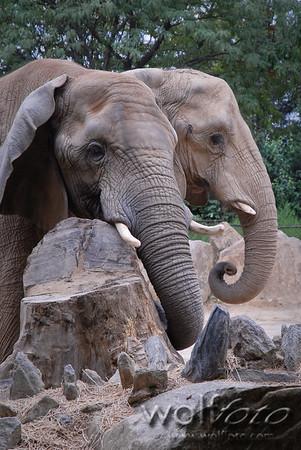 Philadelphia Zoo 20060826
