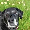 Roxy girl 2011