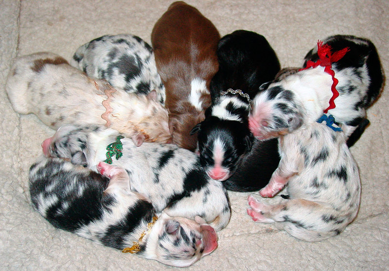 Puppy Pile - 9 in all!