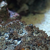 Stonefish. See it? It's there... the eyes are about the only thing that give them away.