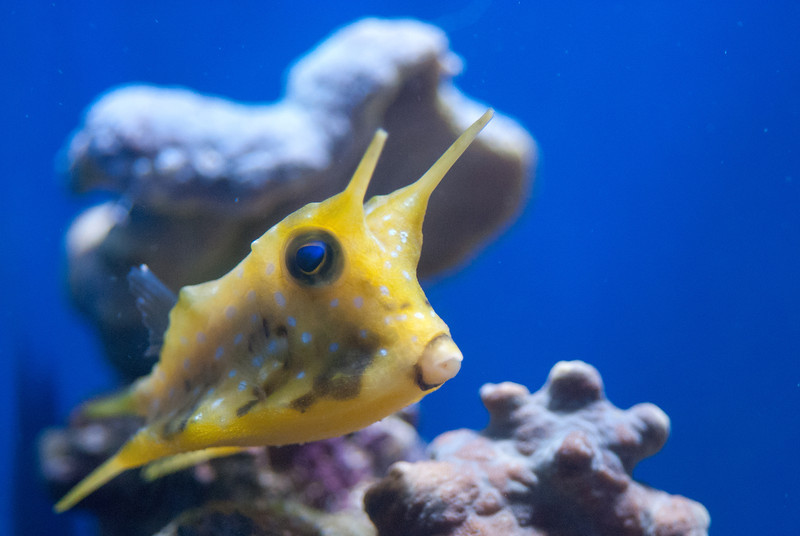 I believe this one was called a frog fish. What a bizarre-shaped animal. I don't get it.