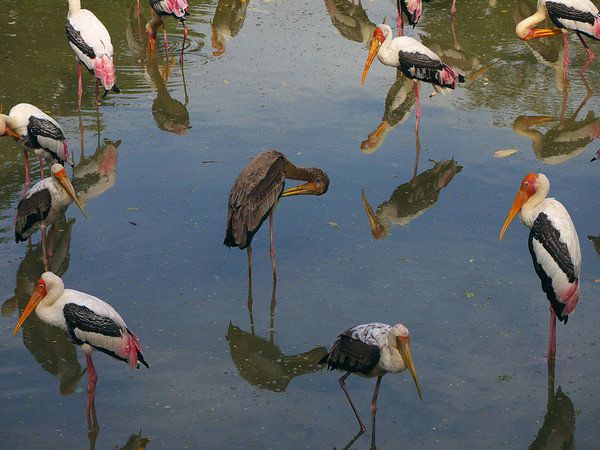 Photokaki Zoo Outing Nov 29, 2009