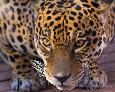 Phx Zoo Trips 2014