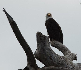 Pioneer Rd Eagle
