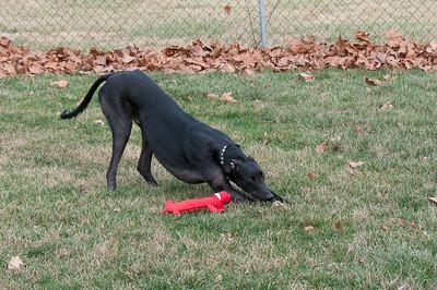 Playing with Triton in the Backyard Feb 2017