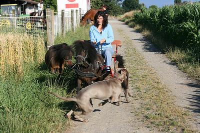 Conny mit ihren Ponies 07.07.08