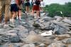 Tourists' Feet, Blue-footed Boobies Nest along Trail, Espanola Island, Galapagos Islands, Ecuador, South America, Pacific Ocean