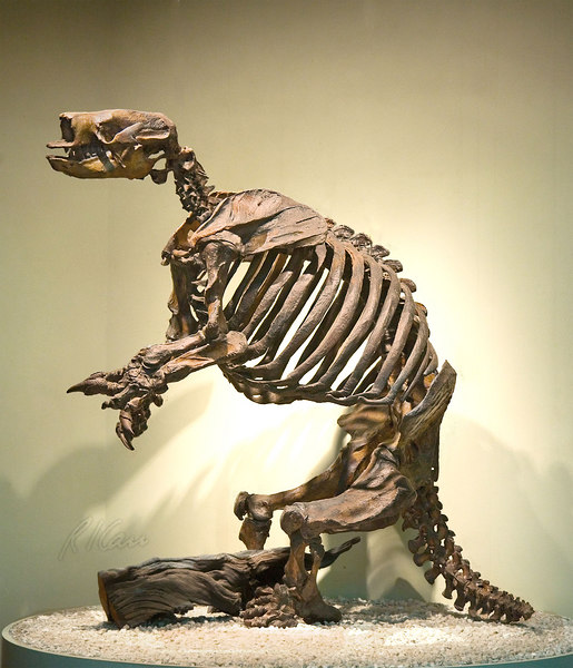 Prehistoric skeleton: Harlan's Ground Sloth, Glossotherium harlani, was medium-sized ground sloth just over 6 feet tall, weighing 1500 pounds. Ground sloths are primitive animals related to today's armadillos and small tree sloths of Centra/South America. Price Museum, La Brea Tar Pits, Los Angeles, California, January 2006.