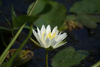 Richardson's pond wild life