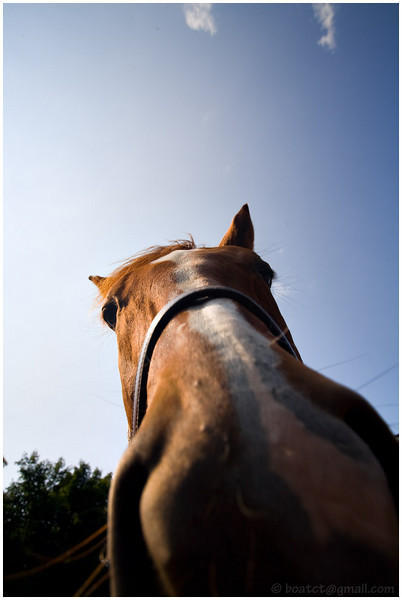 The horses are intrigued by my camera.