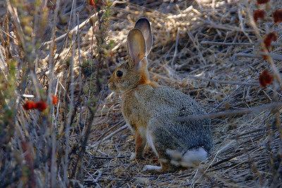 _DSC0436-Rabbit-4x6