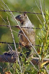 _DSC0443-Squirrel