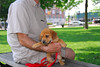 Ripley the cute puppy we met at the park in Plymouth, MI.