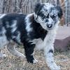 Puppies-160