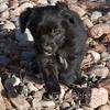 Puppies-278
