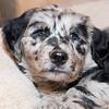 Puppies-315