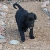Puppies-252