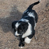 Puppies-272
