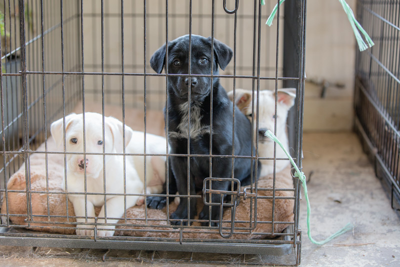 Puppies-19