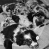 Puppies-320