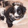 Puppies-309