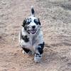 Puppies-226