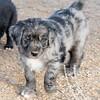 Puppies-168