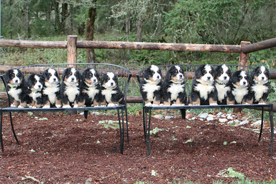 The Nora and Rebel litter.