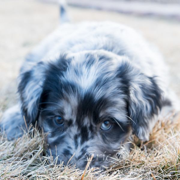 Puppies-217