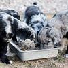 Puppies-37