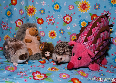 Would the real hedgie please step forward?