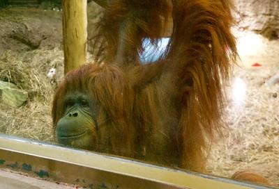 Racine Zoo 453