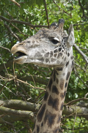 Racine Zoo August 200904